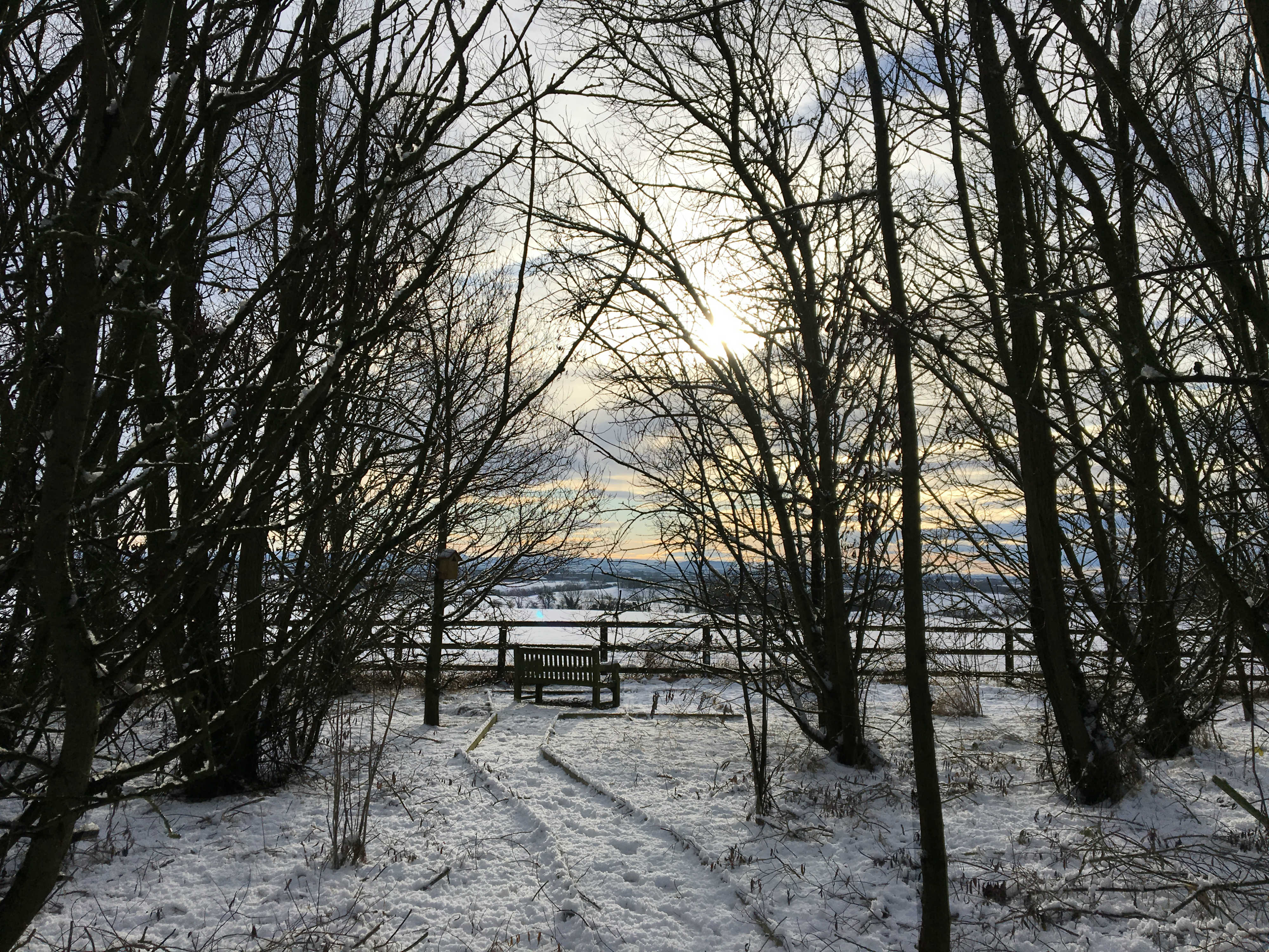 A view of a bench in the woodland in the snow